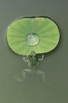 ♥ ⋱‿ ❤AnE LeeLA....Green   Grün   Verde   Grøn   Groen   緑   Emerald   Colour   Texture   Style   Form  