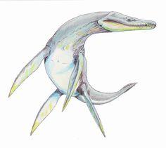 Rhomaelosaurus