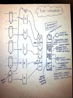 ecocolumn diagram