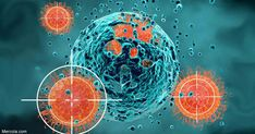 Natural killer cells are a specific type of white blood cell; they induce apoptosis, which destroys the virus along with the infected cell. https://articles.mercola.com/sites/articles/archive/2018/06/25/how-to-improve-immune-function-by-boosting-nk-cells.aspx?utm_source=dnl&utm_medium=email&utm_content=art1&utm_campaign=20180625Z1_UCM&et_cid=DM217248&et_rid=346730180