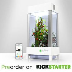 "This is ""Niwa"", an app-controlled hydroponic growing system. Its geared primarily to those living in urban areas/apartments and allows you to grow veggies etc without soil and sun. The app lets you water and take care of the plant with your computer or cell phone wherever you are."