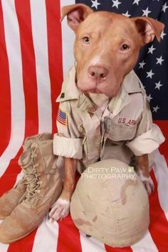 Uplifting So You Want A American Pit Bull Terrier Ideas. Fabulous So You Want A American Pit Bull Terrier Ideas. Pitbull Terrier, Amstaff Terrier, Bull Terriers, Pit Bull Dogs, I Love Dogs, Cute Dogs, Perros Pit Bull, American Pit Bull Terrier, American Dog