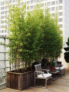 bambus garten im hause wachsen dachterrasse dekoration bamboo garden in the house grow roof terrace decoration Container Plants, Container Gardening, Urban Gardening, Organic Gardening, Balcony Gardening, Bamboo Containers, Fence Garden, Garden Shrubs, Flowering Shrubs
