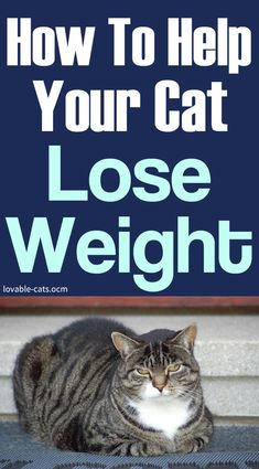 How To Help Your Cat Lose Weight Nutritional Disorders, Cat Toilet Training, Dog Pin, Cat Treats, Love Pet, Say Hello, Cat Lovers, Lose Weight, Lost