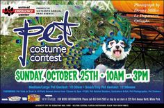 Do you have your dog's costume ready of Sunday's 16th Annual Pet Costume in Winter Park? The competition is pretty steep and the prizes are hefty. Hosted by The Doggie Door, the fun is out of this world and for a great cause: Sebastian Haul Fund, which ensures rescued Greyhounds are transported to their adopted homes. #greyhounds #petcostume #winterpark #sebastianhaulfund