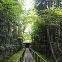 京都 癒しの旅の画像