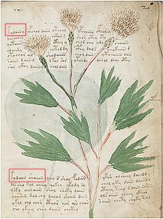 British academic claims to have made a breakthrough in his quest to unlock the 600-year old secrets of the mysterious Voynich Manuscript - News - Student - The Independent