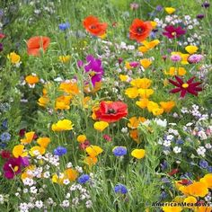 Or scatter a high-quality wildflower seed blend (designed specifically for your region of the country) for low-maintenance but still stunningly gorgeous flower beds and containers. 31 Seriously Useful Gardening Basics Every Beginner Needs To Know