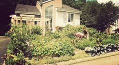 33 Tips on Turning Your Boring Lawn Into a Permaculture Food Forest