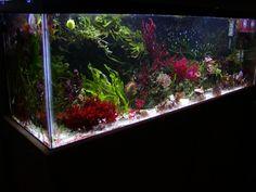 long SW macroalgae tank - The Planted Tank Forum Nano Aquarium, Marine Aquarium, Reef Aquarium, Aquarium Fish Tank, Aquarium Ideas, Saltwater Fish Tanks, Saltwater Aquarium, Freshwater Aquarium, Seahorse Aquarium