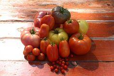 Tipps für den Anbau von Tomaten...