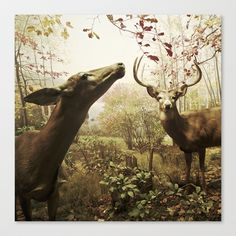 Autumn Deer Stretched Canvas by ZenaZero  - $85.00