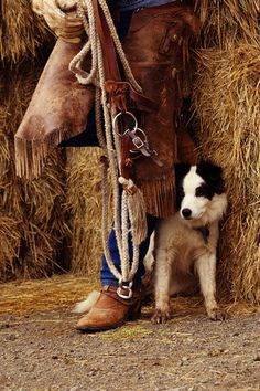 border collie events | Cowboy in Chaps with Border Collie - UL783251 - Rights Managed - Stock ...