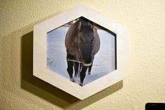 This very cool piece is from Alicia Big Photo, Photo Contest, Horses, Artist, Artwork, Photos, Pageant Photography, Work Of Art, Pictures