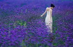 subesteem:   for my purple lovers.