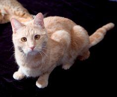 Teego Cross Eyed Ginger Kitty