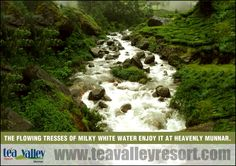 Munnar, this mesmerizing hill station always offers untainted natural beauty to its visitors.
