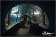 The Newport Aquarium is one of my favorite wedding venues in Cincinnati. It includes the elegance of the city skyline and the fun of sharks! Photos by Pottinger Photography www.pottingerphoto.com Venue: The Newport Aquarium in Newport, Kentucky http://www.newportaquarium.com/Event-space/Weddings.aspx Floral and Event Design by Yellow Canary: http://www.yellowcanaryonline.com/