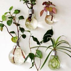 Simple but beautiful DIY for on the wall, great inspiration! #holtbar #conceptstore #groningen #050 #design #flowers #green #nature #lamp #interior #diy #style #fashion #love #white #water