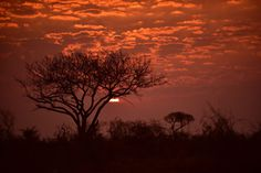 Travelling to deep, dark Africa promises excitement, adventure and breath-taking natural beauty. The Rainbow Nation has plenty to offer. First Choice, Chameleon, European Travel, South Africa, Natural Beauty, Safari, Tourism, Journey, African
