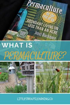 Have you ever wondered what permaculture means? It's plants, animals, and insects living in symbiotic relationship with one another. Check it out!