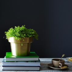 Brass Flower Pot on Provisions by Food52 #provisions #food52