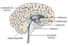 Το σώμα μας - Εγκέφαλος My Job, Memes, Blog, Nursing, Fitness, Art, Craft Art, Meme, Kunst