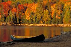 Head east to Ontario, just north of Toronto, where you'll find another eye popping display – the changing of the Sugar Maple leaves in Algonquin Provincial Park. Description from travelsquire.com. I searched for this on bing.com/images
