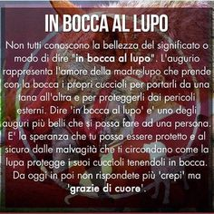 In bocca al lupo.      W il lupo !!💕💕💕 Easter Quotes, Italian Quotes, Ways Of Learning, Zodiac Quotes, Meaningful Quotes, Sentences, Quotations, Affirmations, Love Quotes