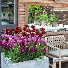 balconi-fioriti-tulipani-rosa
