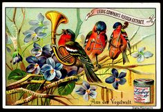 1895. World of Birds (No. 6) trading card issued by Liebig Extract of Beef…