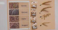 Mit Getreide beschäftigten wir uns ja über eine längere Zeit im Kindergarten. Wir haben verschiedenstes Getreide kennen gelernt. Ich habe es...
