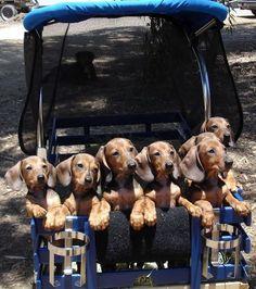 wiener wagon...how cute is that!