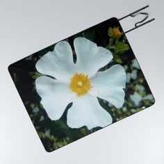 white flower 2 Picnic Blanket by oldking Get The Party Started, Spreads, White Flowers, Picnic Blanket, Blankets, Summertime, The Outsiders, Trips, Sun