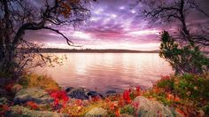 XiNature.com - Colors Beautiful Morning Sky Water Autumn Trees Lake Plants Clouds Lakeshore Early Fall Tranquility Jellyfish Wallpaper
