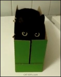 CAT GIF • Funny Black Cat with big round eyes tries to hide in his small green box