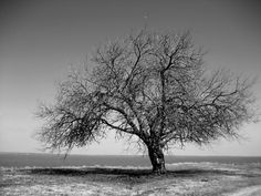 Tree Black And White Wallpaper For Android #6JF