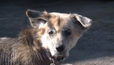 11/20/16 Forgotten senior dog, overlooked for a year-and-a-half Forgotten senior dog, Bella