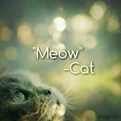 LOL!!! EPIC! Me Quotes, Lol, Cats, Laughing So Hard, Gatos, Kitty Cats, Cat, Cats And Kittens, Kitty