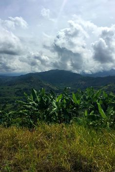 The Coffee Region in Colombia is so beautiful. Visit coffee farms, pueblos and more on a 3-day Coffee Region tour.