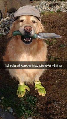 Where else do you need some more digging?