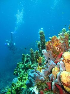 st. thomas virgin islands | Photos of St. Thomas Diving Club, St. Thomas - Attraction Images ...