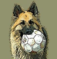 German shepherd dog with ball portrait poster print size A4 Size, Size 10, Alsatian, Dog Portraits, German Shepherd Dogs, Poster Prints, Bird, Pets, Animals