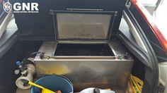 O Palhetas na Foz: GNR apreendeu meixão escondido em tanque inox
