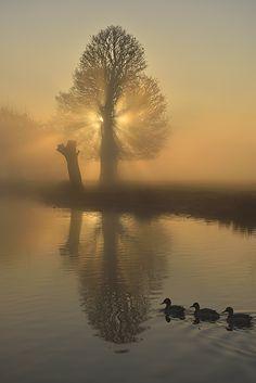 Boating Lake, Bushy Park, England, by Kasia Nowak.