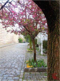 Primăvară în Istanbul | Turca La Un Ceai Istanbul, Sidewalk, Plants, Countries, Sidewalks, Plant, Pavement, Walkways, Planting