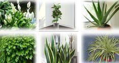 Deze planten zijn zuurstof bommen – zorg ervoor dat ten minste één van hen de lucht in je huis schoon houden