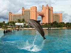 Atlantis Resort in the Bahamas :) Went for my best friends 18th Birthday. LOVED IT.