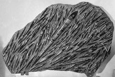 Prado Falque Enchères, Marseille . Grande plaque d'orthoceras Dévonien, 400 millions d'années Fossilisés dans le marbre d'Erfoud 1,5 m x 1 m - Symev - 26/03/2015