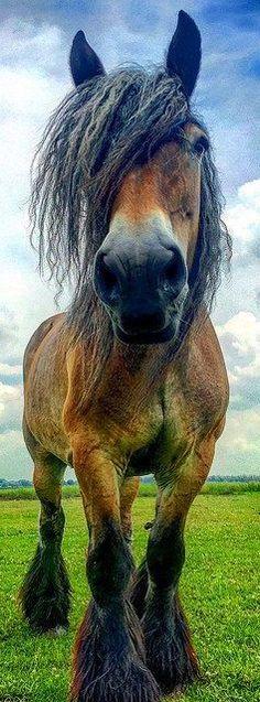 beautiful horse #via: Bjorn Beheydt - flickr